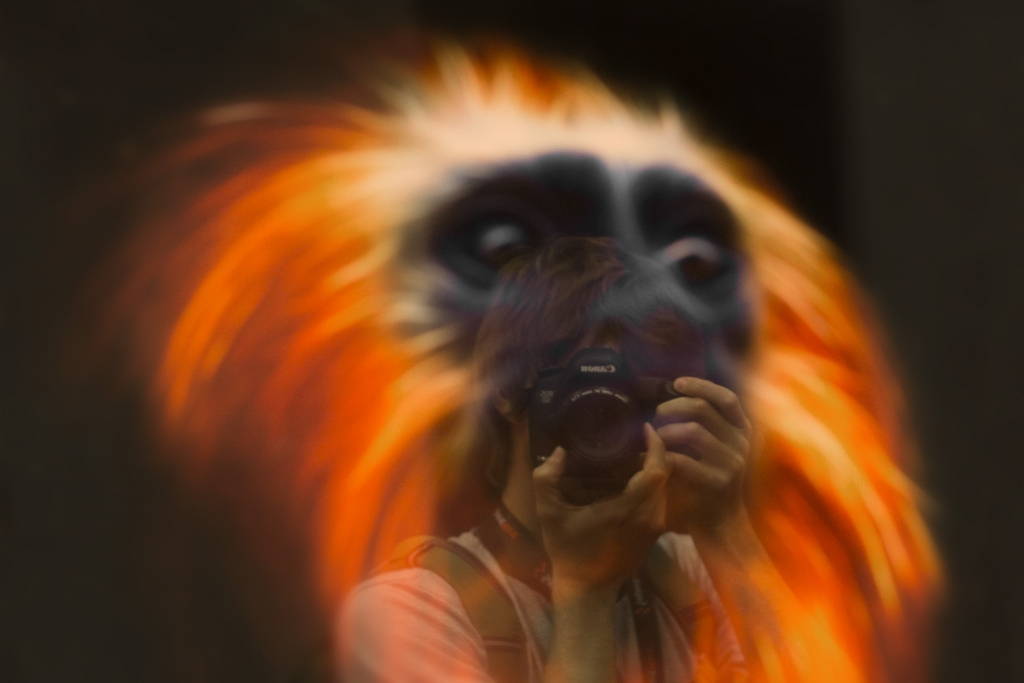 Consider the Fire Monkey