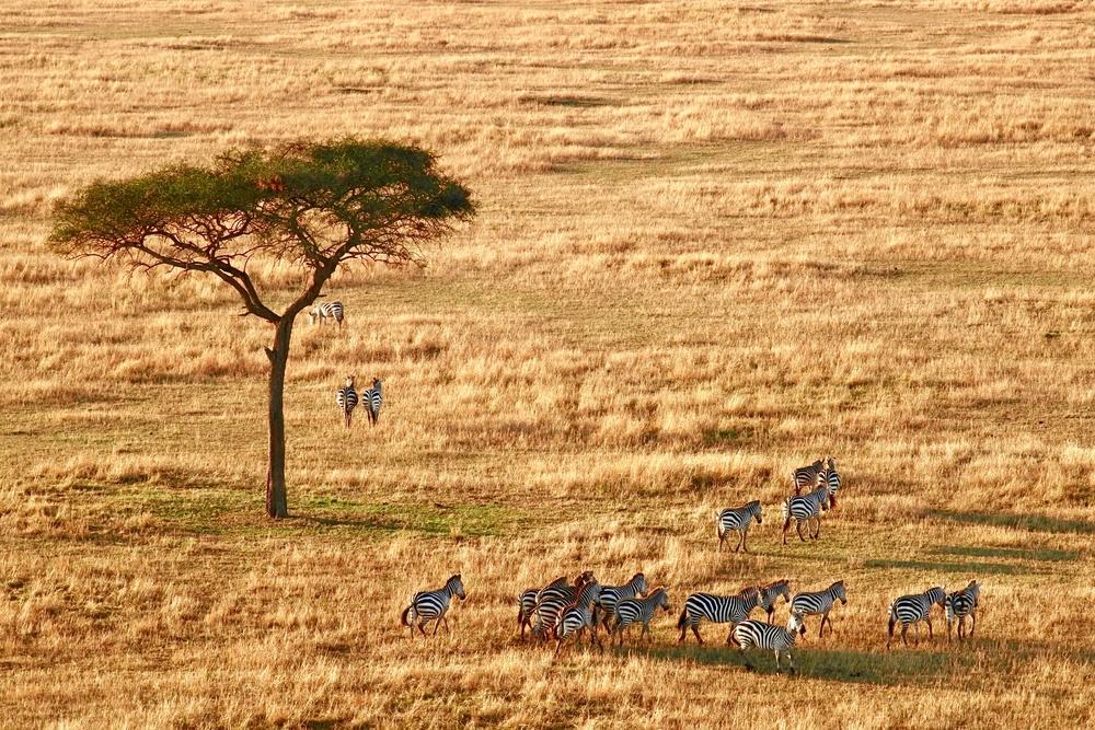 Africa-Wilderness-Zebra